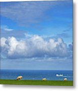 Sheep Grazing On The North Yorkshire Metal Print