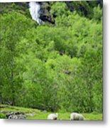 Sheep In A Grassy Mountain Field Metal Print