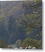 Sheep In A Line Metal Print