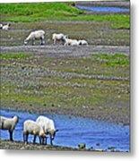 Sheep In Branch-nl Metal Print
