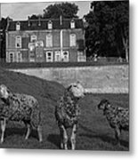 Sheep In French Landscape Metal Print