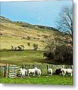 Sheep In Meadow Metal Print