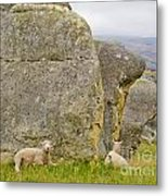 Sheep On A Mountain Pasture Between Granite Rocks Metal Print