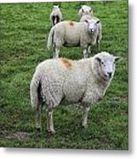 Sheep On Parade Metal Print