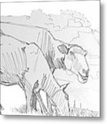 Sheep Pencil Drawing  Metal Print