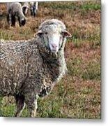 Sheep Portrait Metal Print