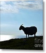 Sheep Silhouetted In Scotland Metal Print