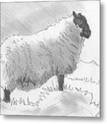Sheep Sketch Metal Print