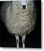 Sheep Metal Print by Stephanie Frey