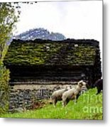 Sheeps And Rustic House Metal Print