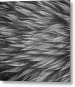 Sheepskin Metal Print