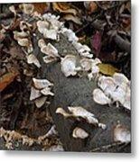 Shelf Mushrooms In Autumn Metal Print