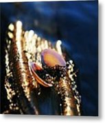 Shell By The River Metal Print