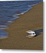 Shell By The Shore Metal Print
