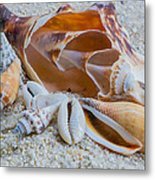 Shell Collectors Dream Metal Print