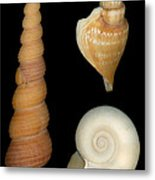 Shell - Conchology - Shells Metal Print by Mike Savad