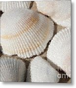 Shell Effects 1 Metal Print
