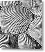 Shell Effects 10 Metal Print