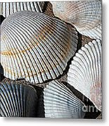 Shell Effects 5 Metal Print
