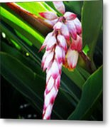 Shell Ginger 1 Metal Print