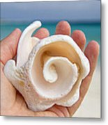 Shell In Hand Cozumel Metal Print