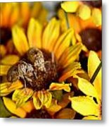 Shell Of A Bug On Flower Metal Print