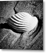 Shell On Sand Black And White Photo Metal Print by Raimond Klavins