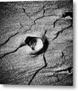 Shell On The Sand Black And White Photography Metal Print