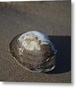 Shell Or Someone's Dinner Metal Print