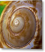 Shell Spiral Metal Print by Garry Gay