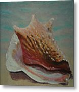 Shell Three - 3 In A Series Of 3 Metal Print by Don Young