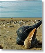 Shells A Plenty Hatteras Point 5 12/5 Metal Print