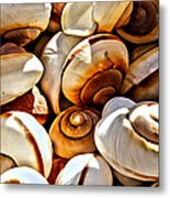 Shells Galore Metal Print