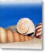 Shells In Sand Metal Print