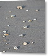 Shells On A Beach Metal Print