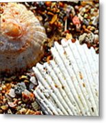 Shells On Sand Metal Print