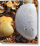 Shells On Sand2 Metal Print by Riad Belhimer