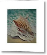 Shells Triptych 2 Metal Print by Don Young