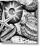 Shellscape In Monochrome Metal Print