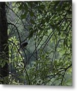Sheltered From The Rain Metal Print