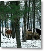 Sheltered In The Trees Metal Print