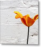 Seriously Orange - Sheltered Metal Print
