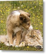 Sheltie Puppy And Persian Cat Metal Print