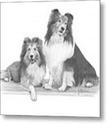 Shelties Metal Print
