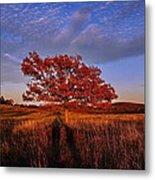 Shenandoah Tree Metal Print