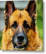 Shep  - German Shepherd Metal Print