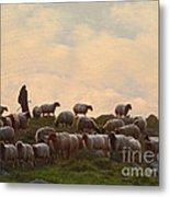 Shepherd With Sheep Standard Size Metal Print