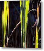 Shepherd's Crook Metal Print