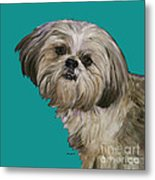 Shih Tzu On Turquoise Metal Print