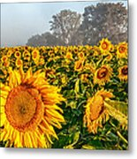 Shine Bright Metal Print